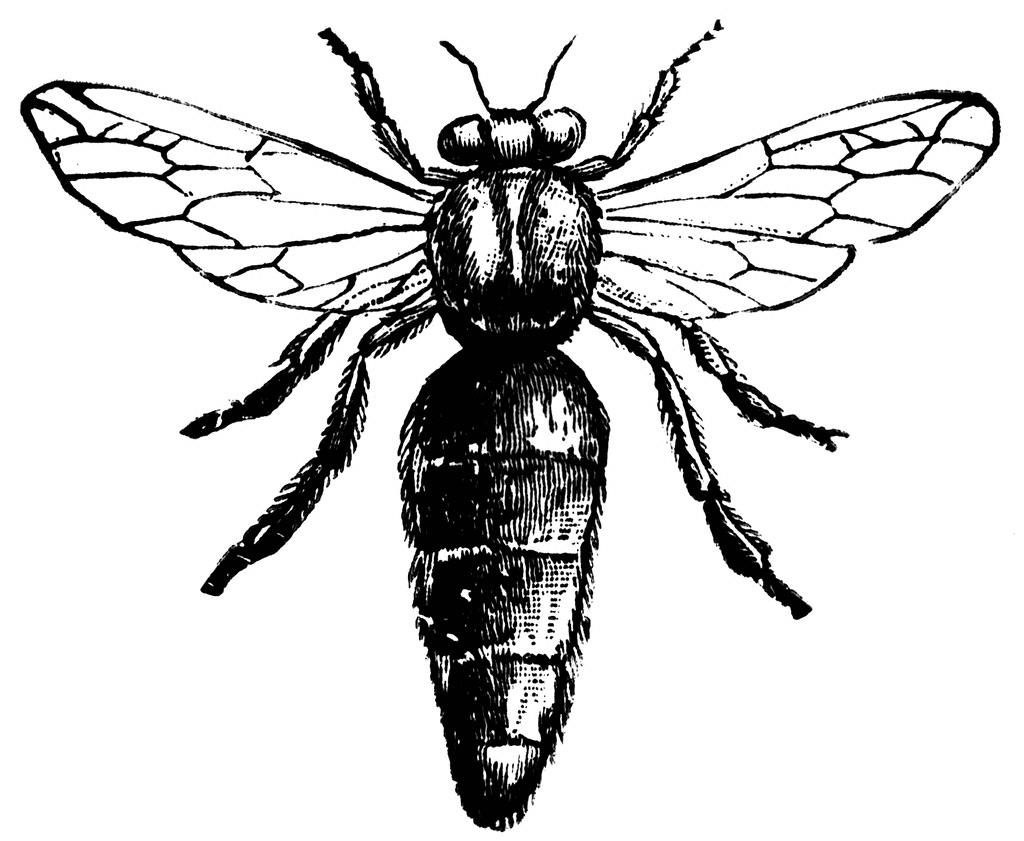Northeast Bees